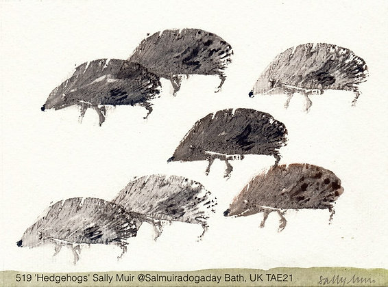 519 'Hedgehogs' Sally Muir @Salmuiradogaday Bath, UK TAE21
