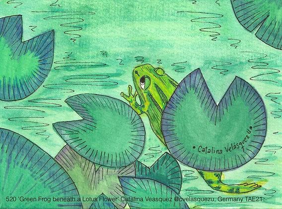 520 'Green Frog beneath a Lotus Flower' Catalina Veasquez @cvelasquezu