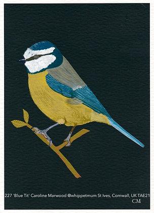 227 'Blue Tit' Caroline Marwood @whippetmum St Ives, Cornwall, UK TAE21