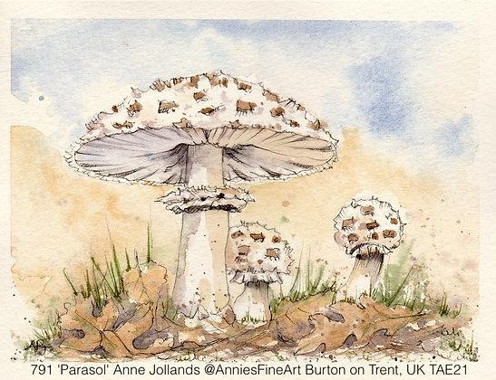 791 'Parasol' Anne Jollands @AnniesFineArt Burton on Trent, UK TAE21