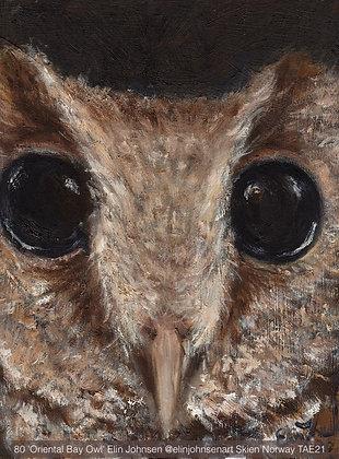 80 'Oriental Bay Owl' Elin Johnsen @elinjohnsenart Skien Norway TAE21