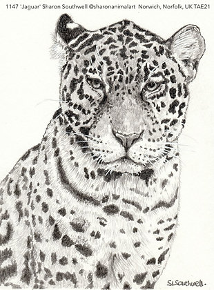 1147 'Jaguar' Sharon Southwell @sharonanimalart  Norwich, Norfolk, UK TAE21