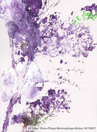 65 'Lilacs' Elaine Phipps @elainephipps Bolton, UK TAE21
