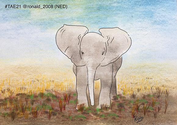 54 'Baby Elephant' Ronald Leunissen @Ronald_2008 Nijmegen, The Netherlands