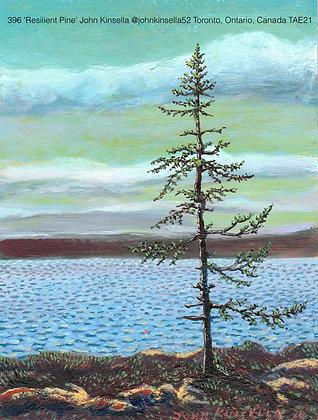 396 'Resilient Pine' John Kinsella @johnkinsella52 Toronto, Canada TAE21