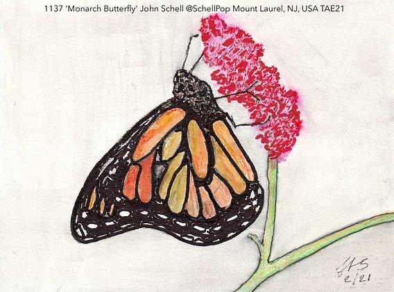 1137 'Monarch Butterfly' John Schell @SchellPop Mount Laurel, NJ, USA TAE21