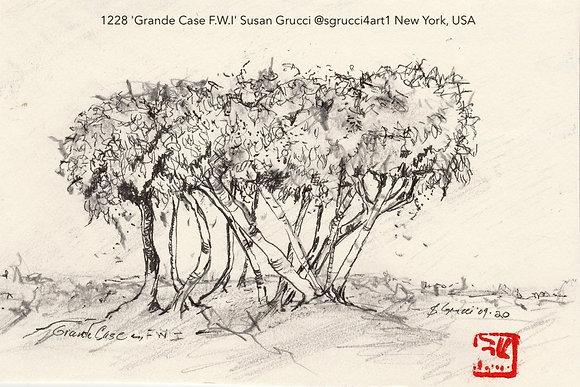 1228 'Grande Case F.W.I' Susan Grucci @sgrucci4art1 New York, USA TA21E