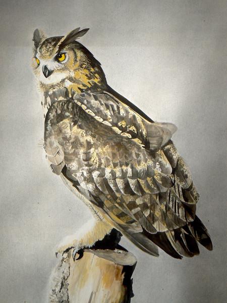 Eurasion Eagle Owl ©Cat Salter-Smith