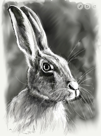 Hare - ©Cat Salter-Smith