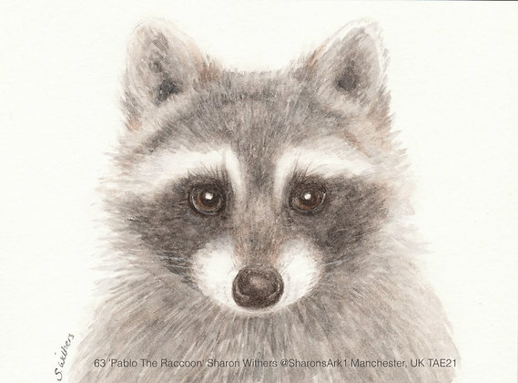 63 'Pablo The Raccoon' Sharon Withers @SharonsArk1 Manchester, UK