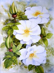 Roses..JPG