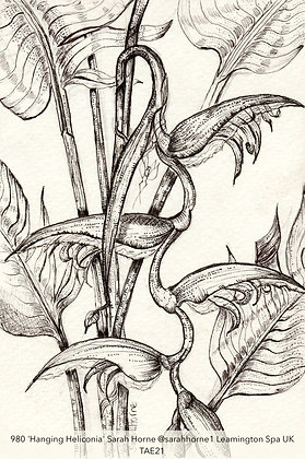 980 'Hanging Heliconia' Sarah Horne @sarahhorne1 Leamington Spa UK TAE21