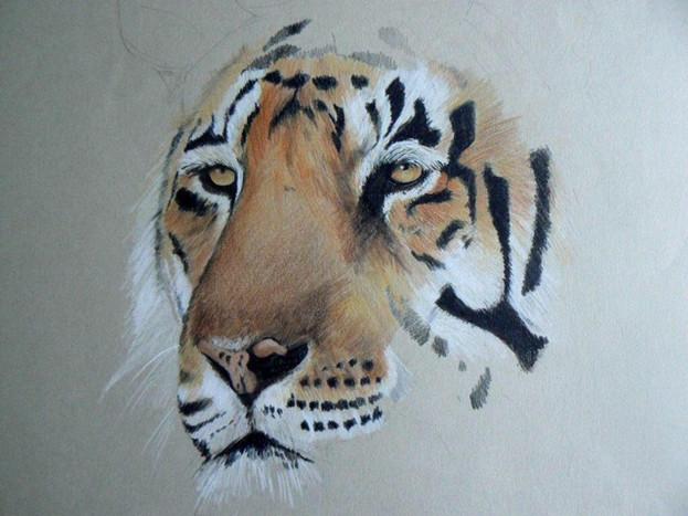 'Tiger, Tiger' ©Cat Salter-Smith