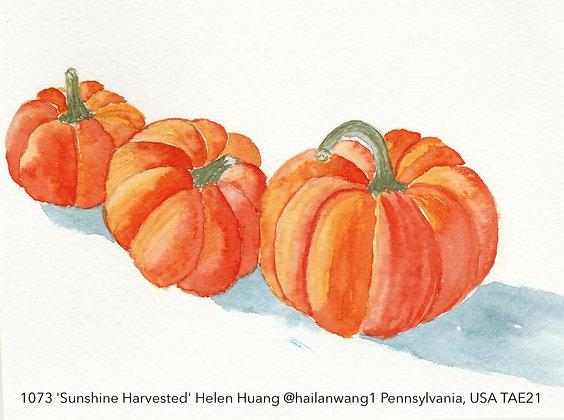 1073 'Sunshine Harvested' Helen Huang @hailanwang1 Pennsylvania, USA TAE21