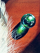 Close up of Feather and Marbles (Available)