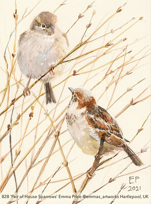 828 'Pair of House Sparrows' Emma Price @emmas_artworks  UK TAE21