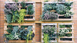 Grow up: Go vertical with your garden by Beth W. Orenstein, The Morning Call