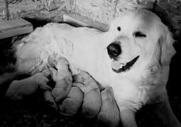 Paris and her newborn puppies