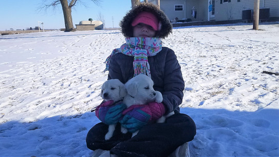 Playing with the puppies in the snow