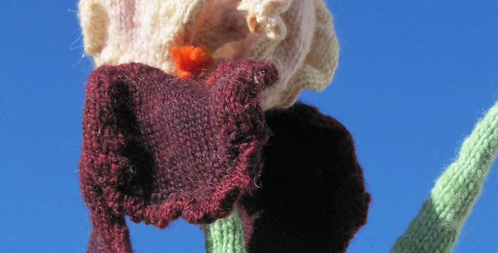Maryann's Bearded Iris