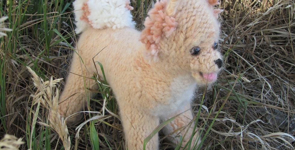 Roxy the Pomeranian