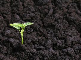 Regenerative Agriculture can improve soil health and rebuild topsoil.