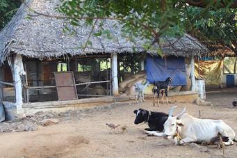 animals farm.jpg