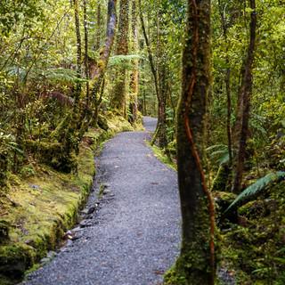 Paths in NZ