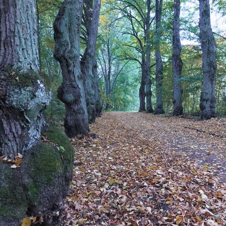 8Am Walk – My A/W Style Essentials