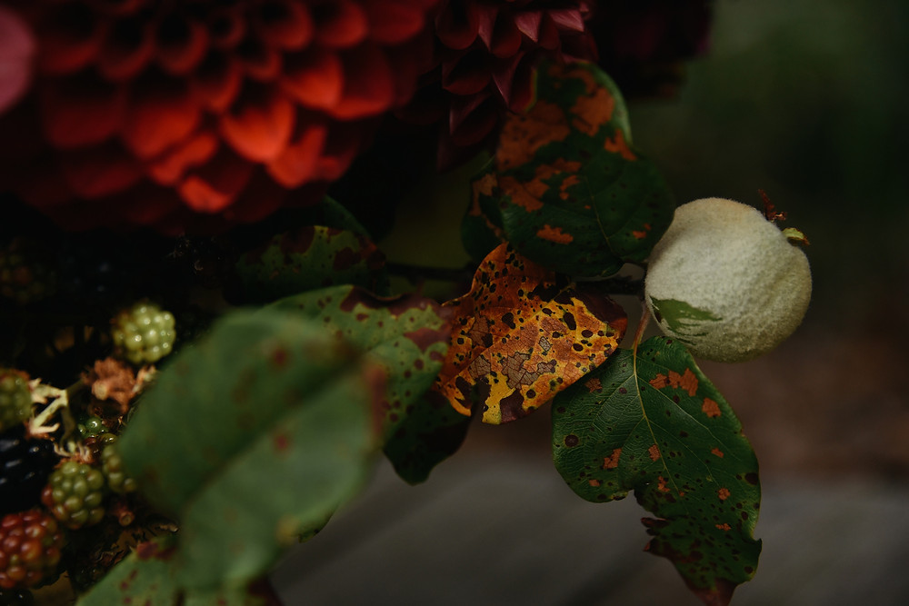 moody midsummer reds