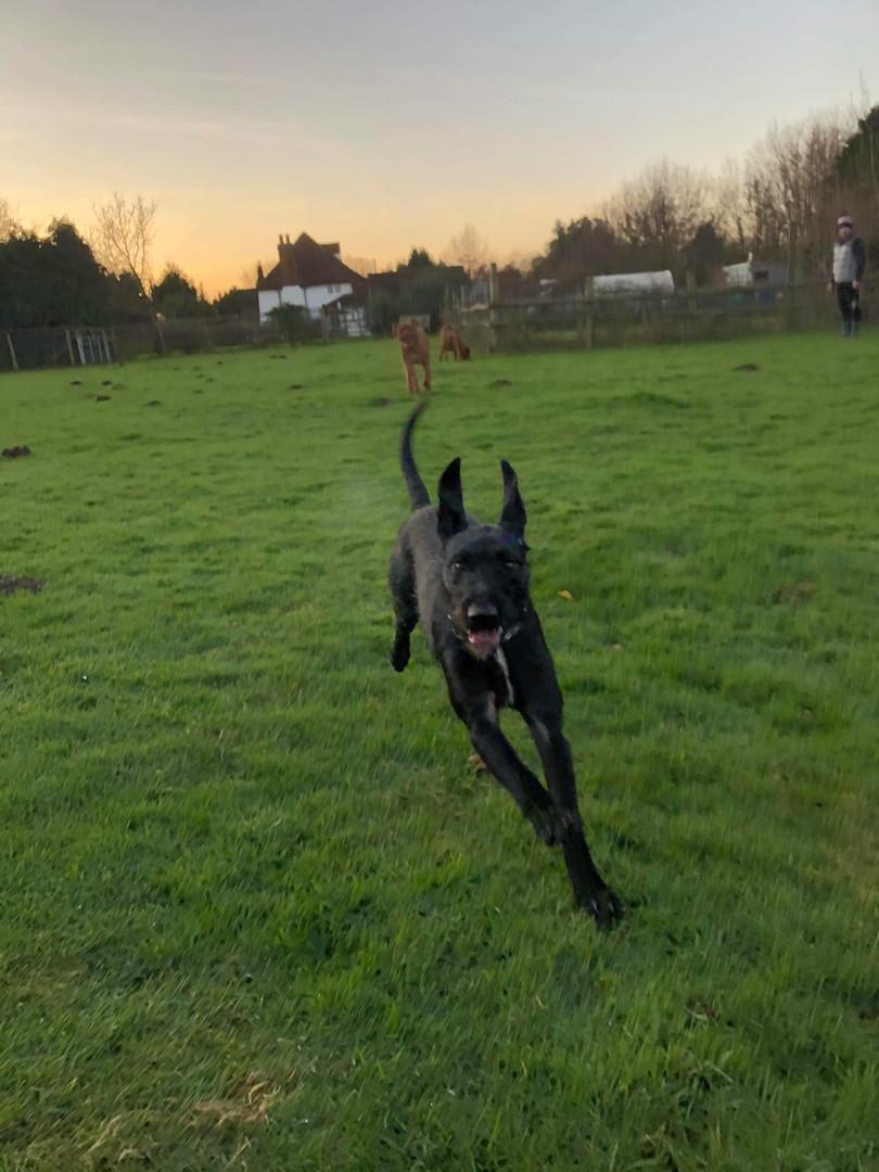 Bertie in action
