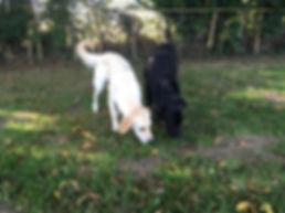 dog friendly fav