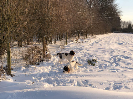 Poppy and Bella in the snow