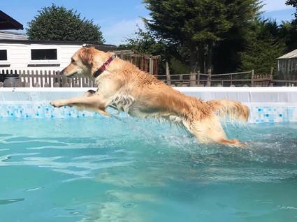 Island Dog n Splash