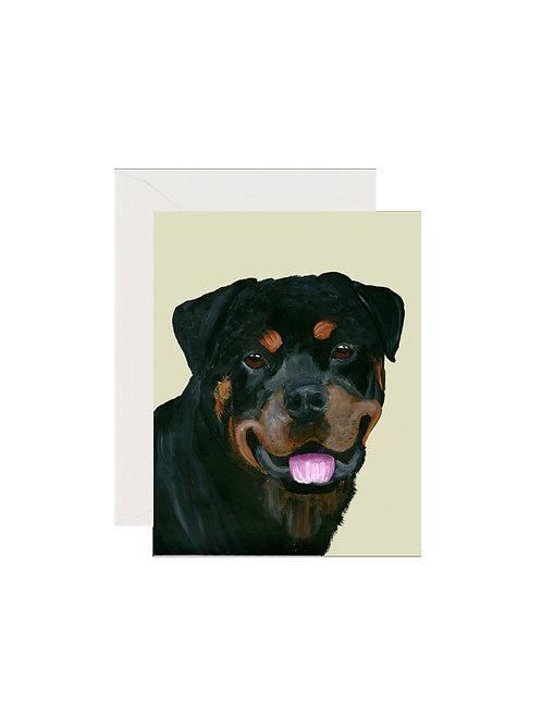 Elvis - Rottweiler