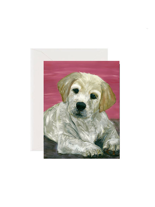 Bailey - Labrador Retriever