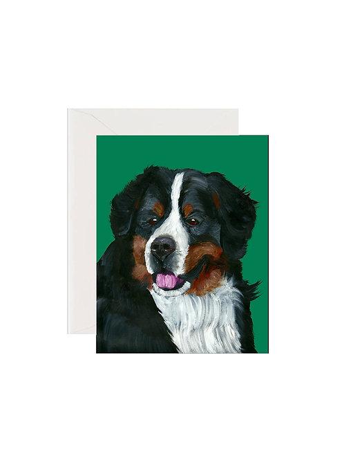 Emery - Bernese Mountain Dog