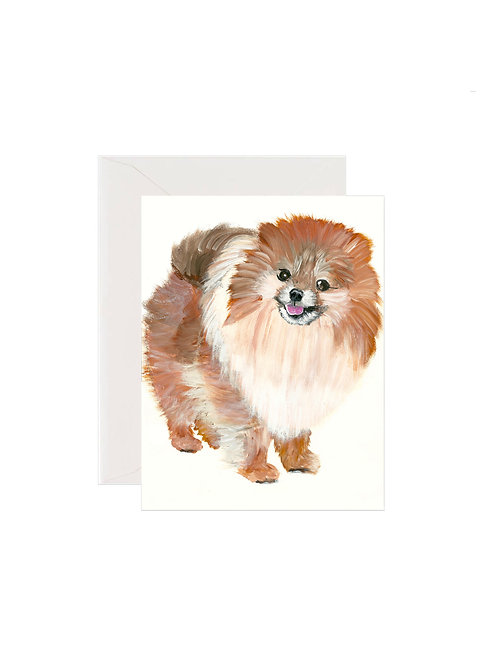 Maverick - Pomeranian