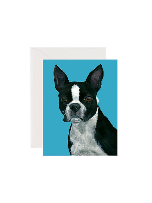 Tucker - Boston Terrier
