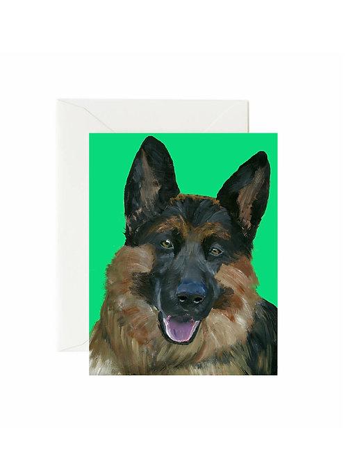 Apollo - German Shepherd