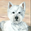 Thumbnail: Frankie - West Highland White Terrier