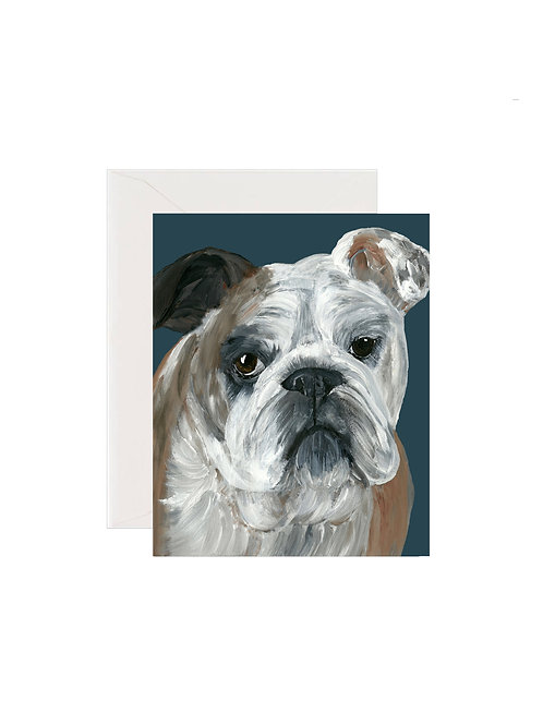 Bella - Bulldog