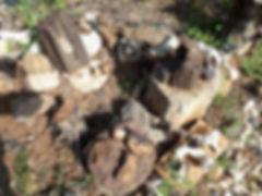 """עצים מאובנים מארה""""ב, סיני ואיזור ים המלח"""