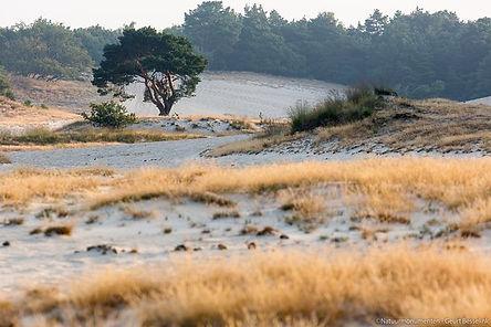 Loonse en Drunense duinen.jpg