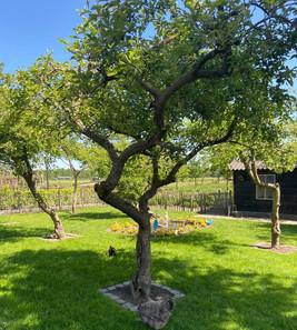 Hof met oude fruitbomen