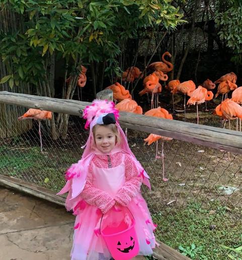Little flamingo.jpeg