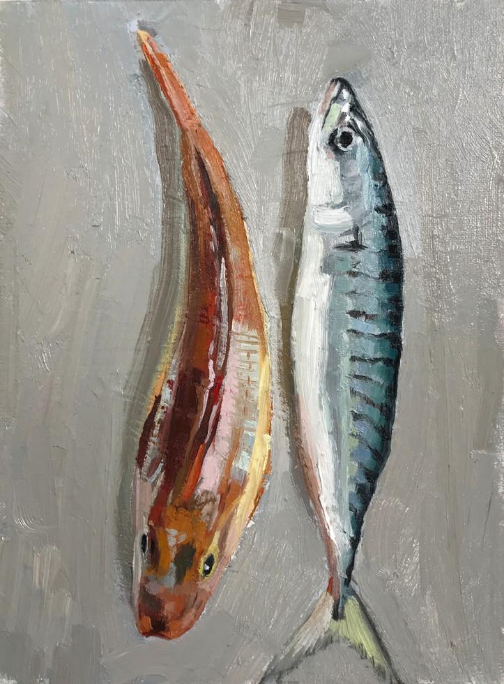 Mackerel and Gurnard