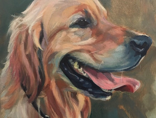 Last chance to book your pet portrait in time for Xmas