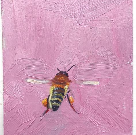 SOLD Pink honey, oil on panel, 10x12