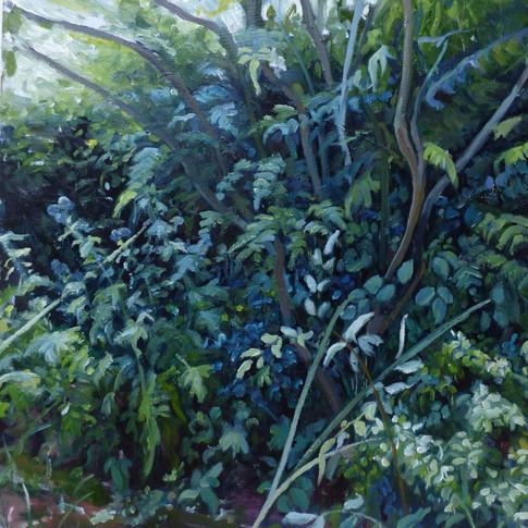 Garden Hedgerow